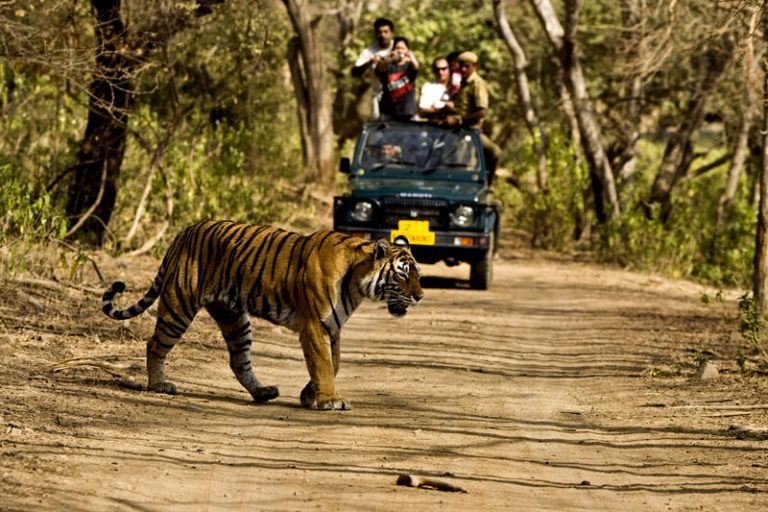 India Wildlife Tours- Best Wildlife Parks to Visit in India