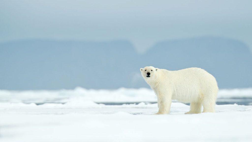 Antarctica-polar region