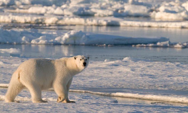 Visit The Icy Polar Regions